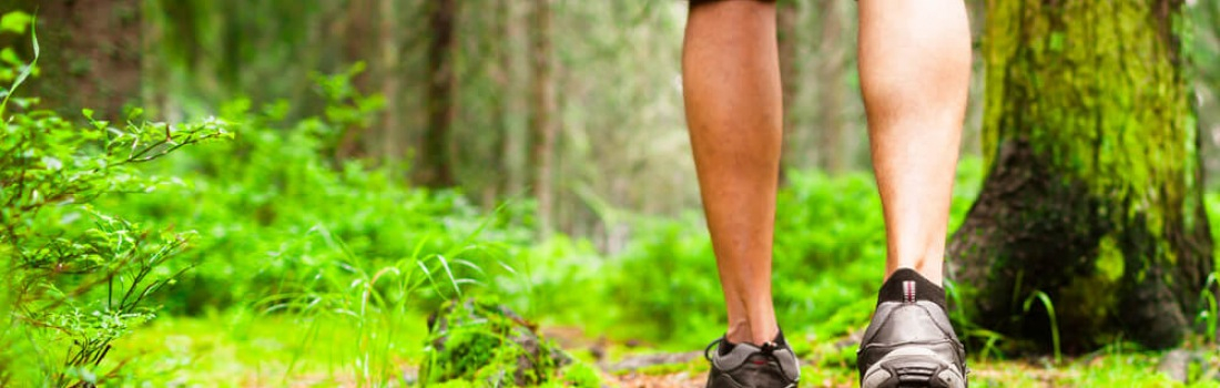 Forest Bathing: A Walk in the Woods May Be Good For Your Health